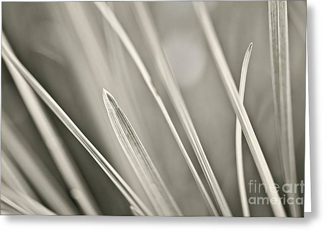 Grass Greeting Cards - Grass  Greeting Card by Elena Elisseeva