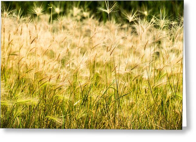 Onyonet Photo Studios Greeting Cards - Grass Feathers Greeting Card by  Onyonet  Photo Studios