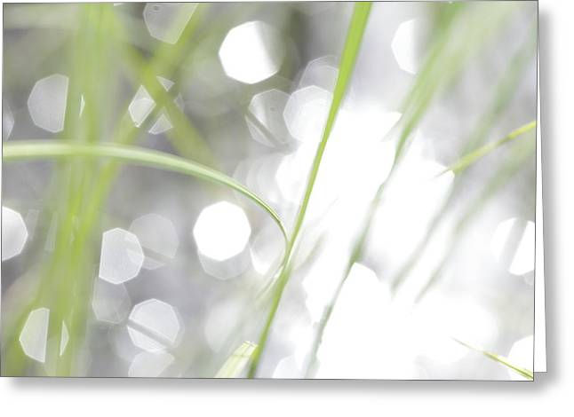 Sensitivity Greeting Cards - Grass growing at the shore of a lake - available for licensing Greeting Card by Intensivelight