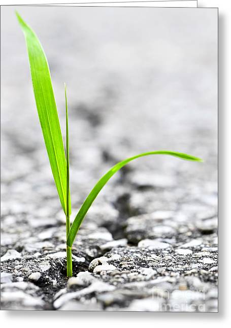 Words Background Greeting Cards - Grass in asphalt Greeting Card by Elena Elisseeva