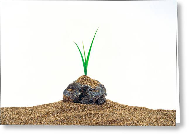 Generate Life Greeting Cards - Grass Growing From Stone Settled In Sand Greeting Card by Panoramic Images
