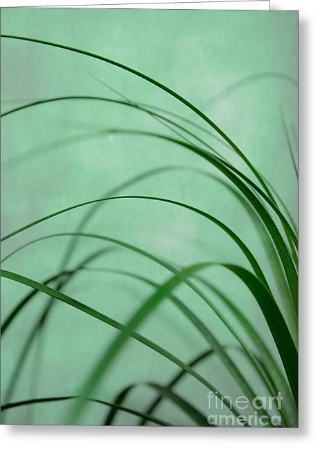Hannes Cmarits Greeting Cards - Grass Impression Greeting Card by Hannes Cmarits