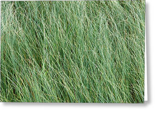 Adirondack Mountains Greeting Cards - Grass In The Field, Adirondack Greeting Card by Panoramic Images