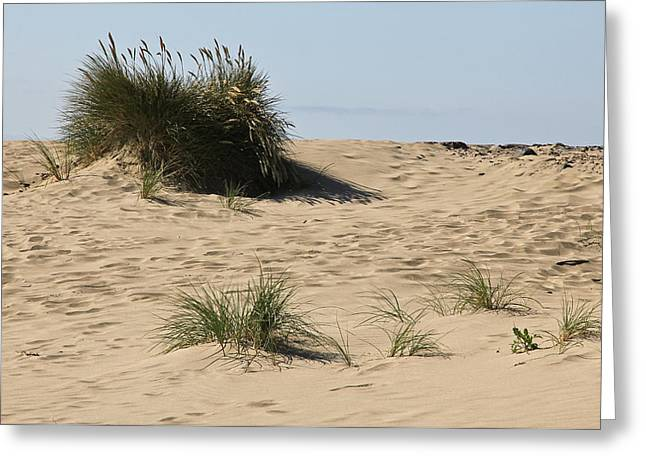 Surf City Greeting Cards - Grass In The Sand Greeting Card by Athena Mckinzie