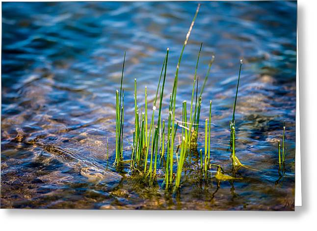 Decor Photography Greeting Cards - Grass in the Water Greeting Card by  Onyonet  Photo Studios