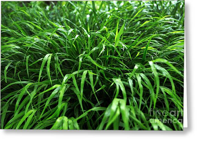 Green Blade Of Grass Greeting Cards - Grass Greeting Card by John Rizzuto
