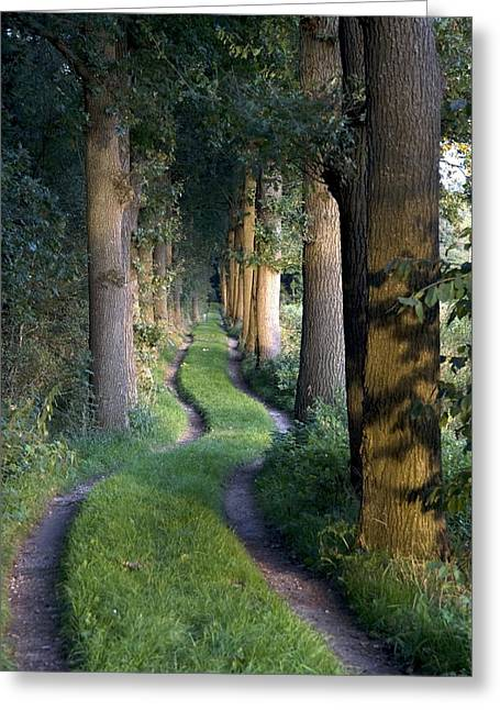 Tortuous Greeting Cards - Grass Lane Greeting Card by Ronald Jansen