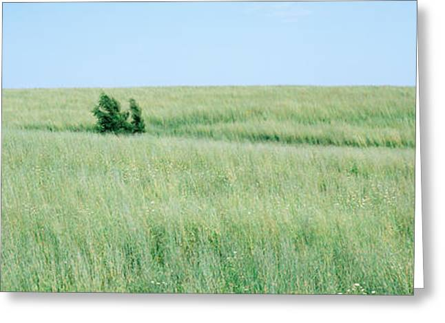 Prairies Greeting Cards - Grass On A Field, Prairie Grass, Iowa Greeting Card by Panoramic Images