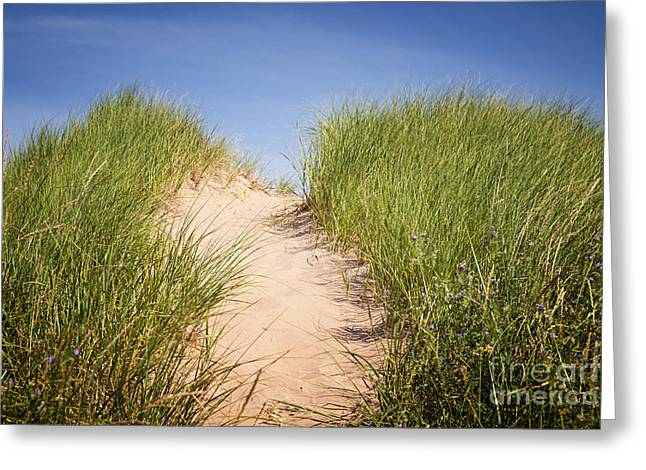 Dune Grass Greeting Cards - Grass on sand dunes Greeting Card by Elena Elisseeva