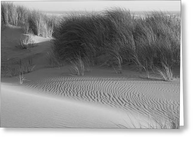 Ocean Photography Greeting Cards - Grass On The Beach, Pacific Ocean Greeting Card by Panoramic Images