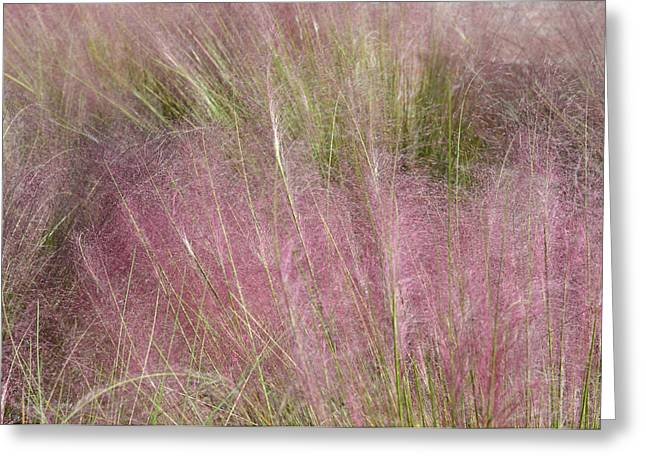 Soft Greeting Cards - Grass Photography - Soft - By Sharon Cummings Greeting Card by Sharon Cummings