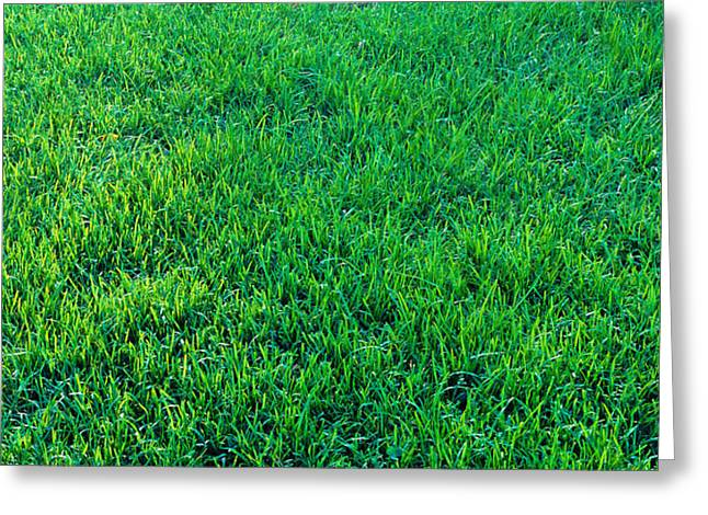 Green Blade Of Grass Greeting Cards - Grass Sacramento Ca Usa Greeting Card by Panoramic Images