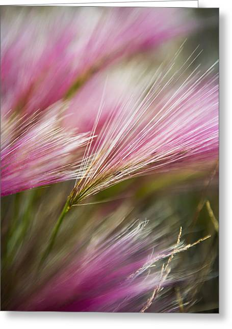 Toby Greeting Cards - Grass Seed Heads During Short Summer Greeting Card by Toby Adamson