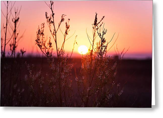 Golden Summer Grass Greeting Cards - Grass Silhouette Greeting Card by Ulrich Schade