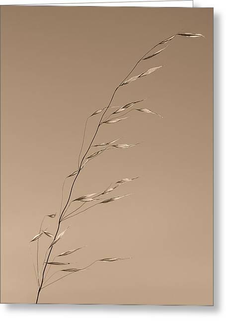 Wild Grass Greeting Cards - Grass Stalk  Greeting Card by Joseph Smith