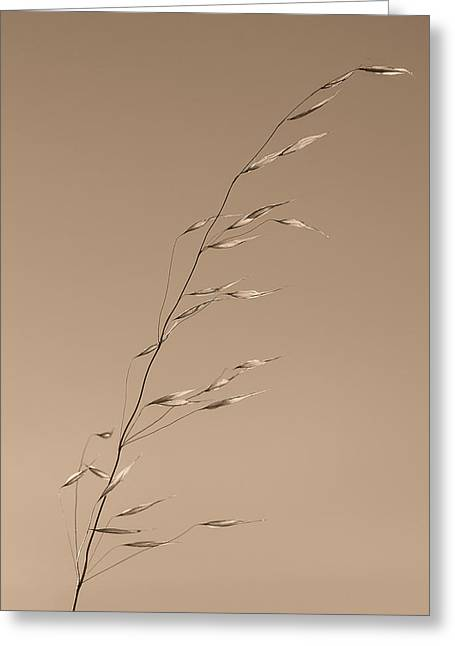 Wild Grass Greeting Cards - Grass Stalk  Greeting Card by Joseph Smith