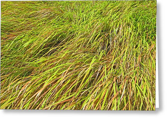 Tepl Greeting Cards - Grass Weather Greeting Card by Pete Marchetto