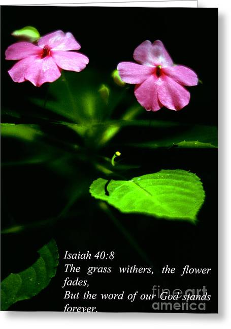Isaiah Greeting Cards - Grass Withers Flowers Fade Greeting Card by Thomas R Fletcher