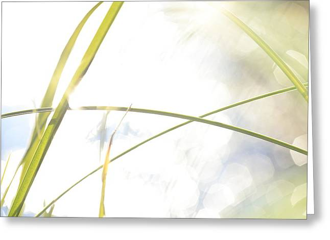 Sensitivity Greeting Cards - Grasses and shimmering lake - high key - available for licensing Greeting Card by Intensivelight