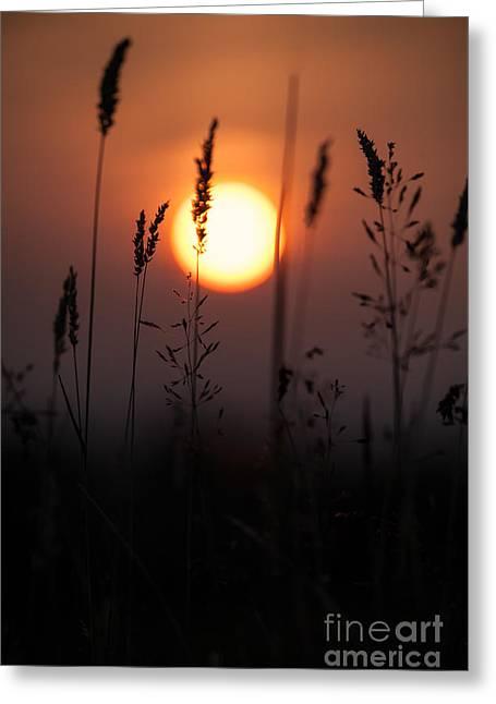 Orange Sunset Greeting Cards - Grasses At Sunset Greeting Card by Jan Bickerton