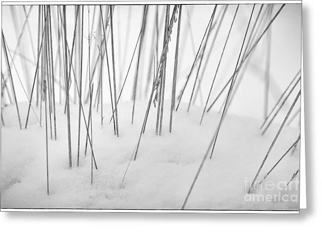 Lounge Digital Art Greeting Cards - Grasses in the Snow Greeting Card by Natalie Kinnear