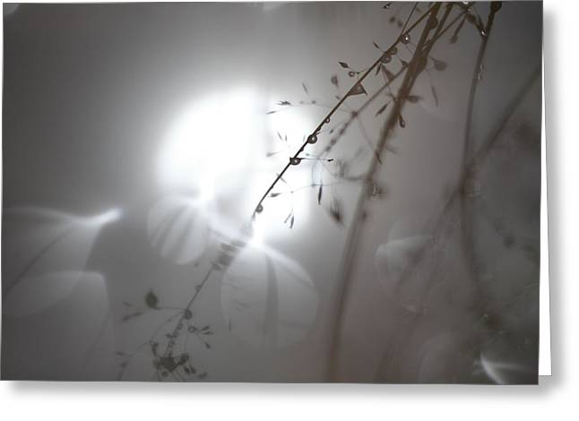 Sensitivity Greeting Cards - Grasses with rain drops reflected in a pond Greeting Card by Intensivelight