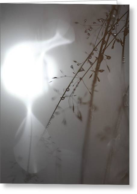 Sensitivity Greeting Cards - Grasses with raindrops reflected in a pond Greeting Card by Intensivelight