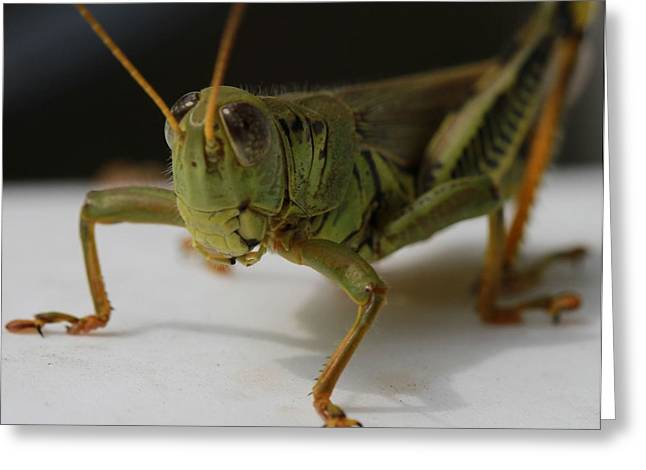 Mandible Greeting Cards - Grasshopper Greeting Card by Dan Sproul