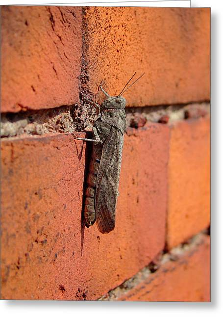 Photographs With Red. Greeting Cards - Grasshopper Greeting Card by Gothicolors Donna Snyder