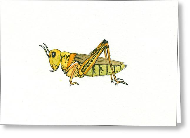 Grasshopper Paintings Greeting Cards - Grasshopper Greeting Card by Katherine Miller
