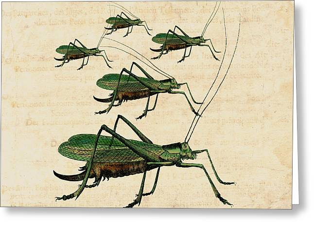 Katydid Greeting Cards - Grasshopper Parade Greeting Card by Antique Images