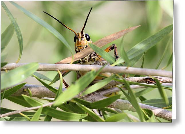 Oranger Greeting Cards - Grasshopper Peeking at Me Greeting Card by Suzie Banks