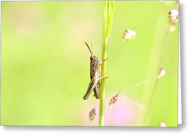 Antenna Mixed Media Greeting Cards - Grasshopper  Greeting Card by Toppart Sweden