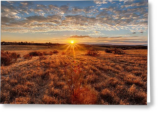Prarie Greeting Cards - Grassland Sunset Greeting Card by Peter Tellone