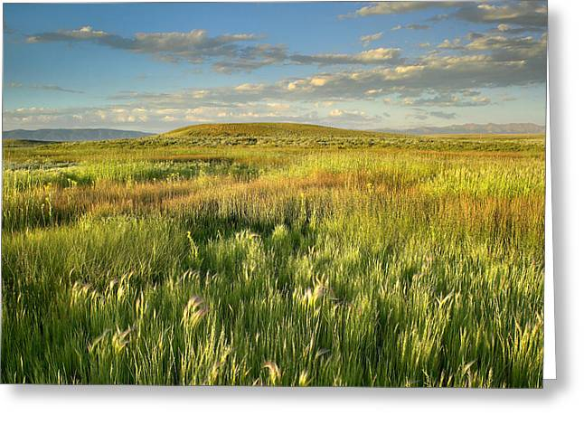 Arapaho Greeting Cards - Grasslands  Arapaho NWR Greeting Card by Tim Fitzharris