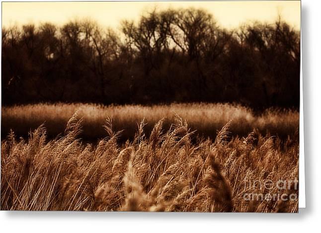 Reserve Greeting Cards - Grasslands Greeting Card by Douglas Barnard