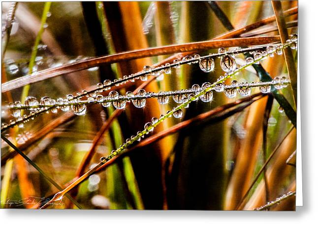Droplet Greeting Cards - Grassy Droplets  Greeting Card by Hastings Franks