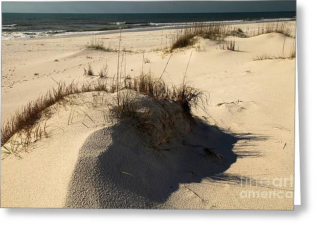 Pristine Beaches Greeting Cards - Grassy Dunes Greeting Card by Adam Jewell
