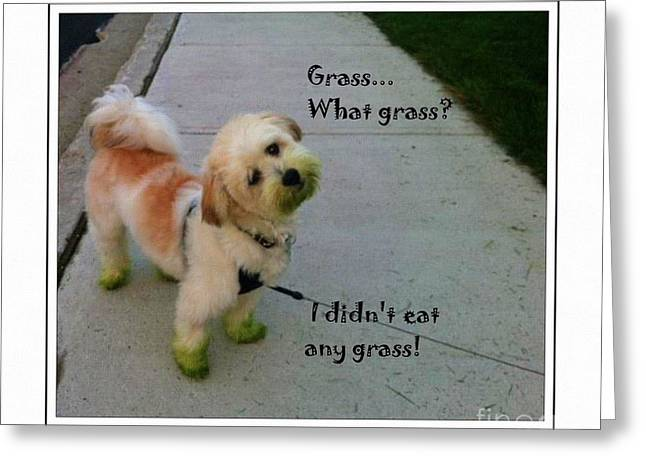 Green Barbara Griffin Art Greeting Cards - Grassy Puppy - Dog - Curiosity - Eating Grass Greeting Card by Barbara Griffin