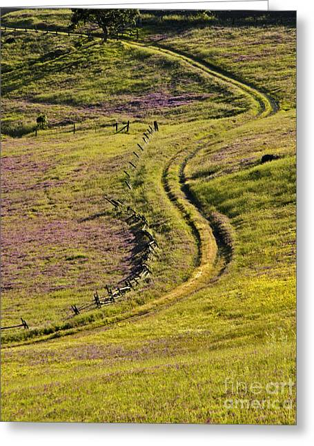 Country Dirt Roads Greeting Cards - Grassy Road Greeting Card by J. Christopher Briscoe