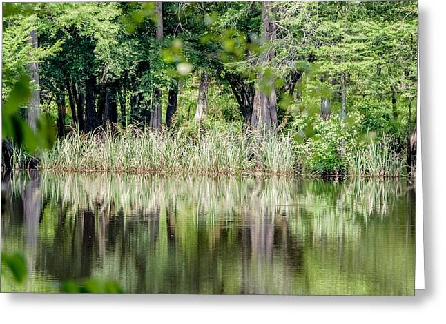 Landscape Photos Greeting Cards - Grassy shoreline Greeting Card by Geoff Mckay