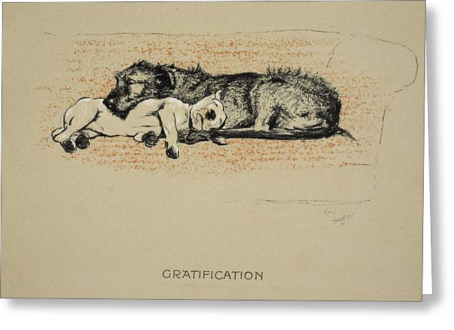 Terrier Dog Drawings Greeting Cards - Gratification, 1930, 1st Edition Greeting Card by Cecil Charles Windsor Aldin
