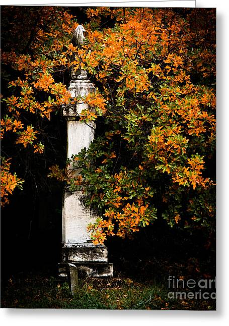 Religious Photographs Greeting Cards - Grave Trees Greeting Card by Sonja Quintero