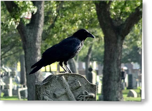 Bird On Tree Greeting Cards - Graveyard Bird Greeting Card by Gothicolors Donna Snyder