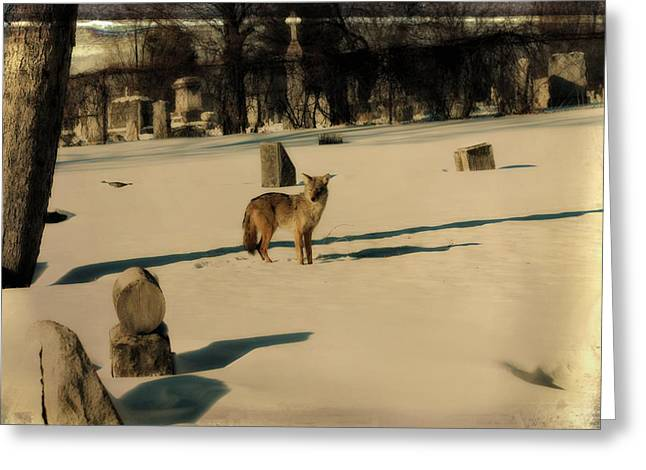Winter Landscape With Animals Greeting Cards - Graveyard Wildlife Greeting Card by Gothicolors Donna Snyder