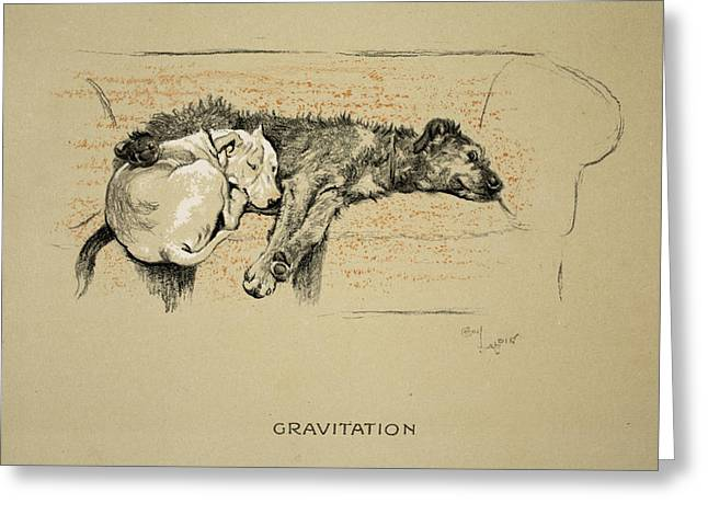 Terrier Dog Drawings Greeting Cards - Gravitation, 1930, 1st Edition Greeting Card by Cecil Charles Windsor Aldin