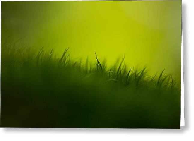 Moss Green Greeting Cards - Gravity Greeting Card by Shane Holsclaw