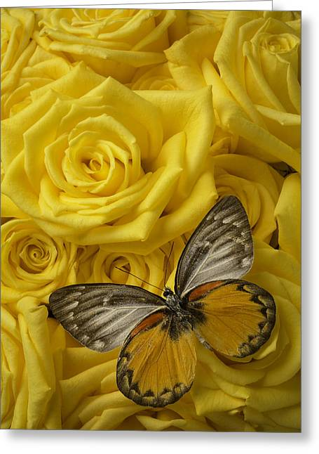 Gray Photographs Greeting Cards - Gray And Orange Butterfly Greeting Card by Garry Gay