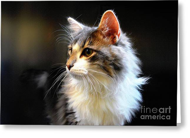 Catherine White Greeting Cards - Gray and White Cat Greeting Card by Catherine Sherman