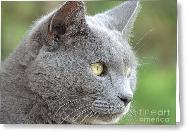 Gray Hair Greeting Cards - Gray Cat on Watch Greeting Card by Kathy Brown